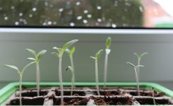 Do I Grow From Seeds or Clones? Find out Which is Best For You