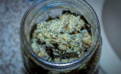 Harvest Tips:  A Guide to Drying and Curing Cannabis Buds