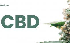 Canna-Compounds 101: CBD