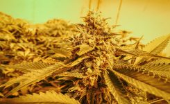 Cultivation 101: The Flowering Cycle